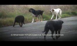Αδέσποτα / Πανελλήνιος Κτηνιατρικός Σύλλογος Erricos Tsipianitis