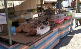 Σχιστό: Tο παράνομο εμπόριο ζώων καλά κρατεί. Το ίδιο και σ όλη τη χώρα με τις αρχές να μην αντιδρούν