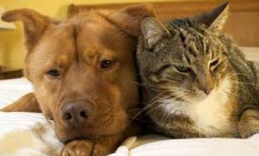 Γιατί δεν ψηφίστηκε η Συνταγματική κατοχύρωση της προστασίας των ζώων Υποκρισίες και δήθεν ενδιαφέρον για το περιβάλλον.
