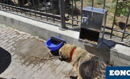 Διχάζουν τα καταφύγια αδέσποτων ζώων σε δασικές και χορτολιβαδικές εκτάσεις !